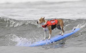 surfdog3