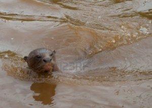 muddyotterwater